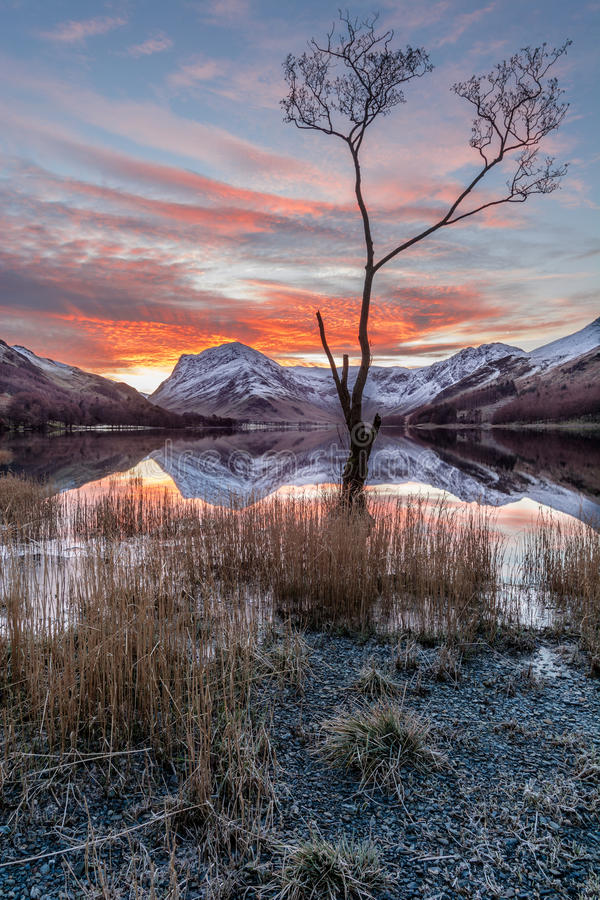 Famous Buttermere Lone Tree With Beautiful Sunrise. royalty free stock photo