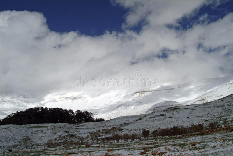 The famous Cedars of Lebanon Reserve on the slopes of Qurnat as Sawda in Lebanon. The famous reserve of precious Cedars of Lebanon trees on Lebanon`s highest stock images