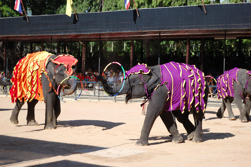 The famous elephant show in Nong Nooch. PATTAYA, THAILAND - SEPTEMBER 7: The famous elephant show in Nong Nooch tropical garden on September 7, 2010 in Pattaya royalty free stock photos