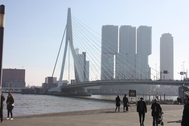 The famous Erasmus Bridge amidst the mist on a late autumn day in Rotterdam, Holland, the Netherlands royalty free stock images