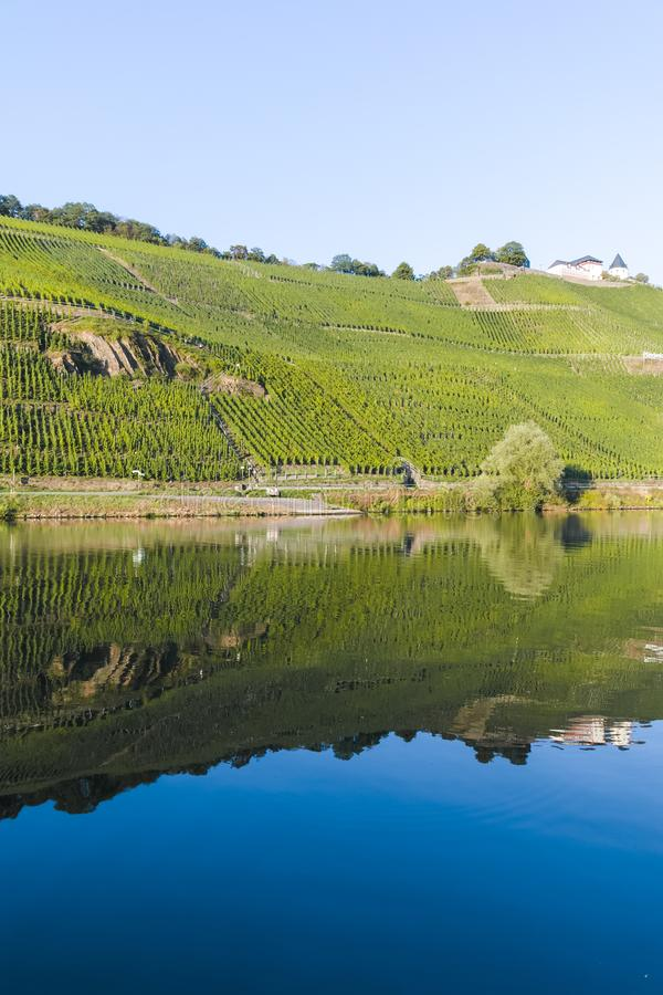 Famous green terraced vineyards in Mosel river valley, Germany, production of quality white and red wine, riesling. Landscape with famous green terraced royalty free stock photography