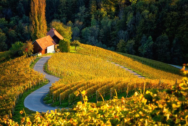 Famous heart shaped wine road in Slovenia, scenic view from Spicnik near Maribor. Amazing autumn landscape, vineyard hills royalty free stock photos