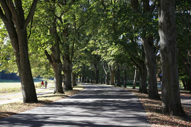 Famous Lichtentaler Allee, with cycle path, stream Oos and strollers in Baden-Baden stock photo