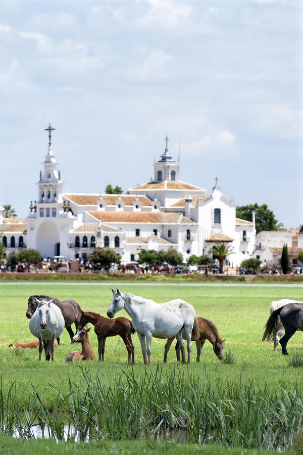 Famous pilgrimage Church El Rocio and wild horses royalty free stock image