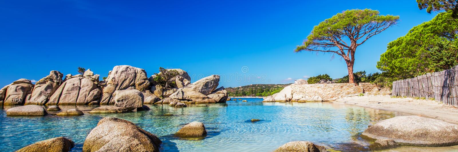 Famous Pine Tree with lagoon on Palombaggia beach, Corsica, France, Europe. royalty free stock photography