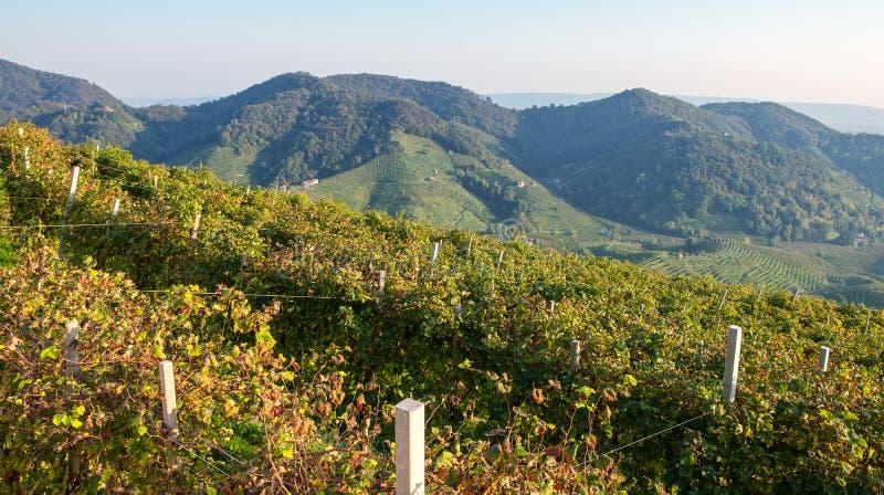 The famous Prosecco vineyards Nortern Italy, Veneto Region. Color image stock photo
