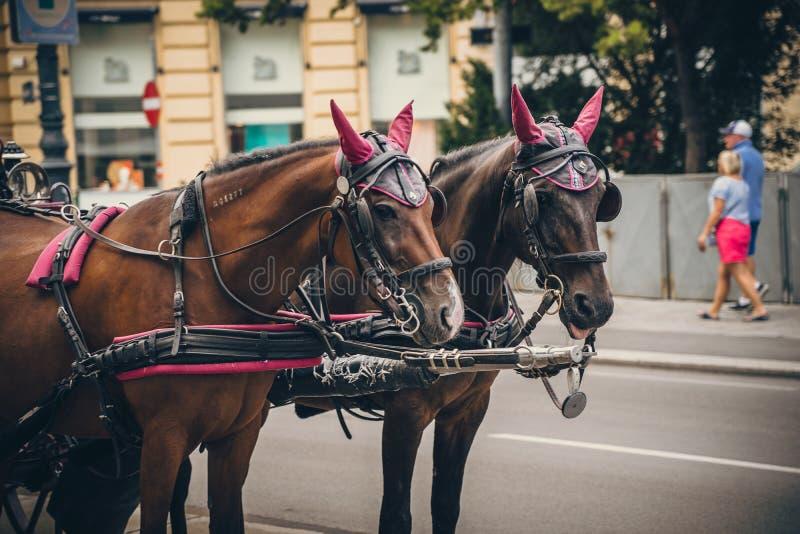 Famous street horse vervoer in Wenen Wien, Oostenrijk royalty-vrije stock fotografie