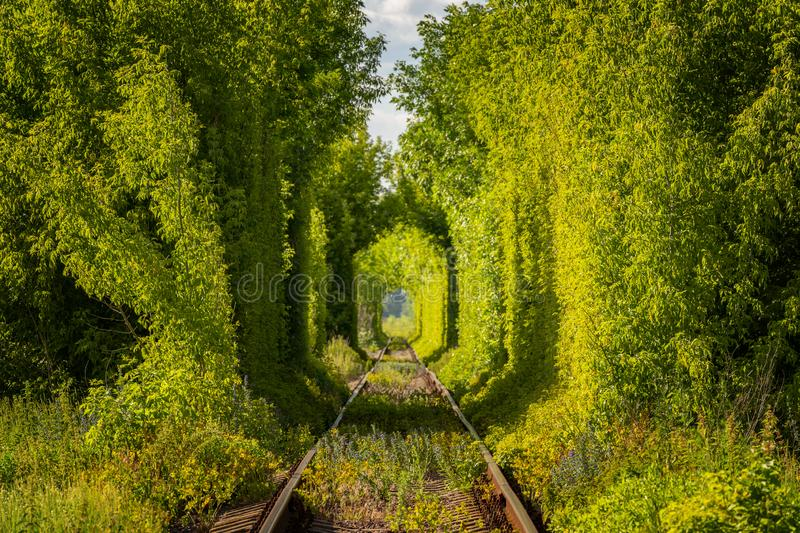 Famous Tunnel of Love in Ukraine stock images
