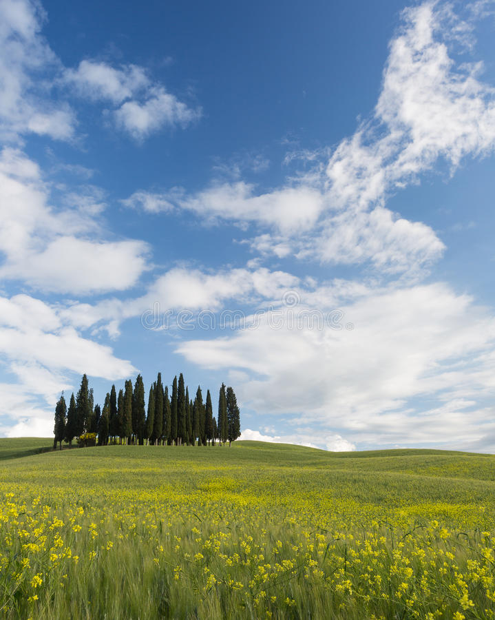Download Famous Tuscan Cypress Trees Stock Image - Image: 31342191