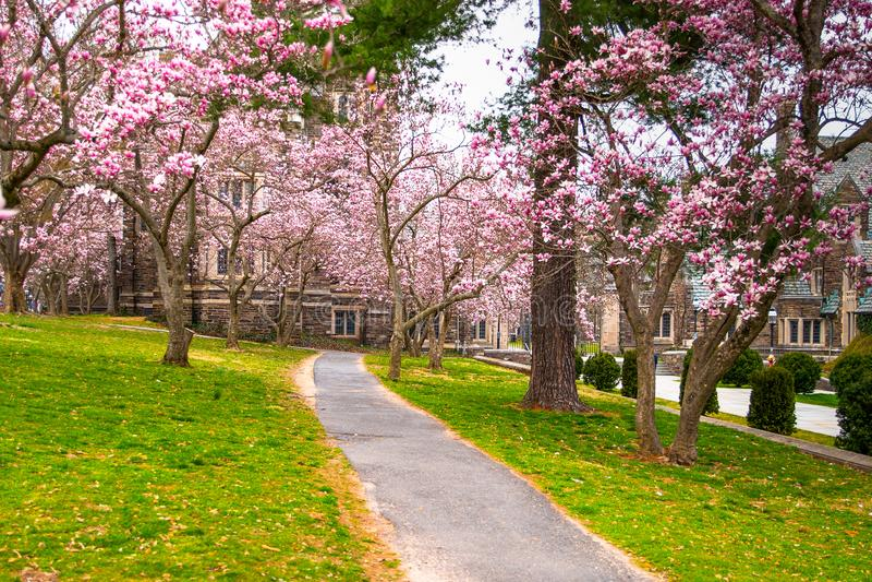 Famous university Princeton Plainsboro. Garden in blossom in Princeton NJ. Spring in Princeton village. Famous university Princeton Plainsboro royalty free stock photos