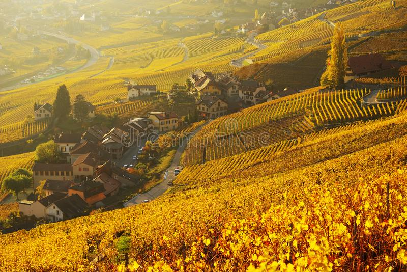 Autumn colors in a vineyard in Vaux, on the shores of Lake Leman. The famous vineyard terraces at Lake Geneva in autumn, Lavaux, Vaud, Switzerland stock photography