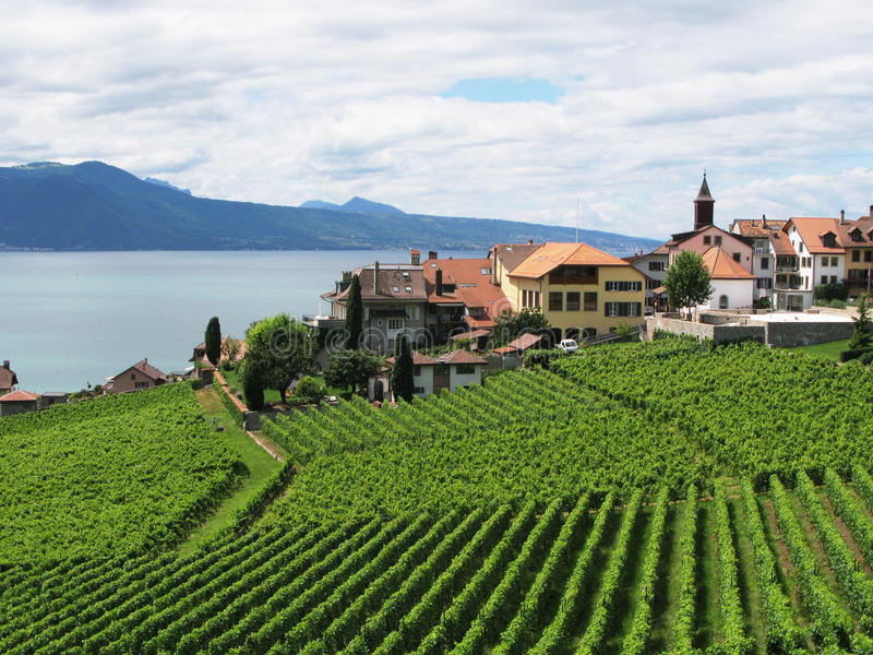 Download Famous Vineyards In Lavaux Region Stock Photo - Image of champagne, peaceful: 10698260