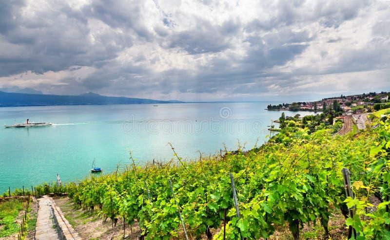 Download Famouse Vingårdar I Geneva Laken Arkivfoto - Bild av druvor, väx: 27284306