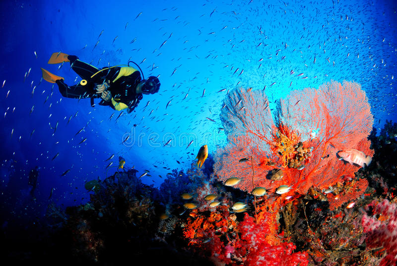 Fan de mar asombrosa en el mundo subacuático magnífico imagenes de archivo
