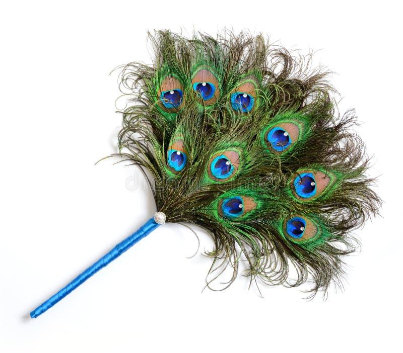 Fan della piuma del pavone fotografia stock libera da diritti