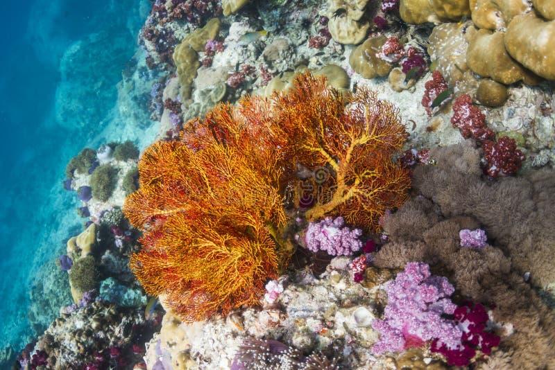 Fan nouée par jaune à l'île de Lipe images libres de droits