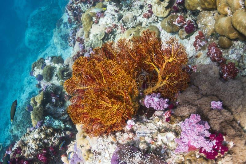 Fan nouée par jaune à l'île de Lipe photos stock