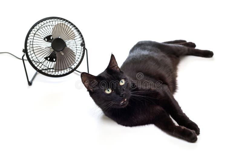 Fan y gato negro fotos de archivo libres de regalías