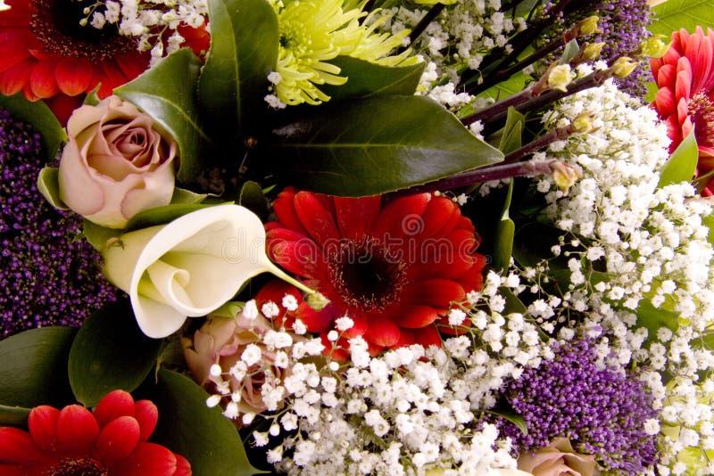 Fancy flowers royalty free stock photo