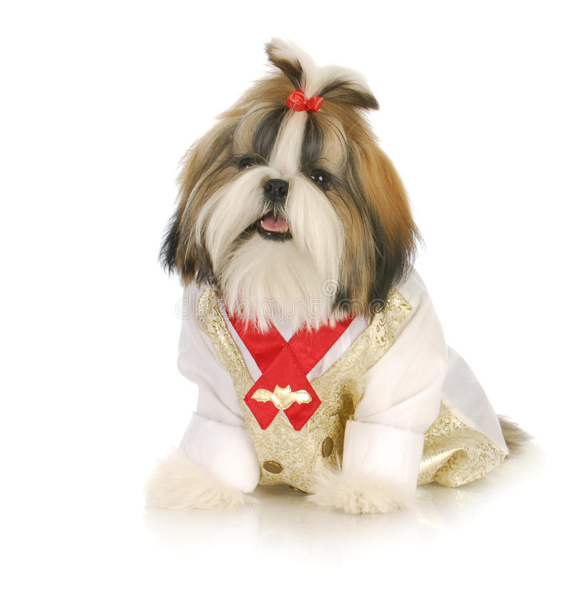 Fancy puppy stock images