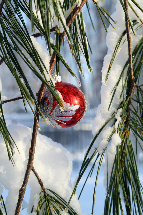 Download Fancy Red Xmas Ball In A Pine Tree Stock Image - Image of seasonal, shiny: 12075069