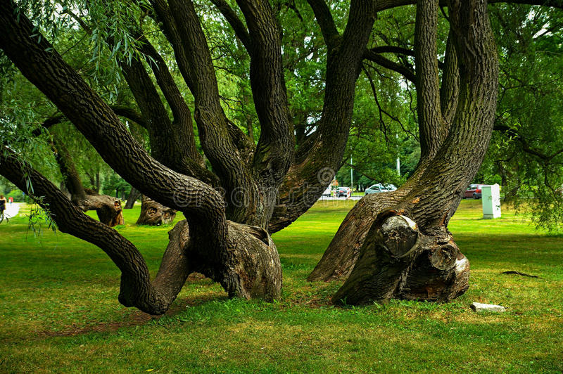 Fancy tree shapes. Summer. Fanciful forms of trees adorn landscapes in nature royalty free stock photography