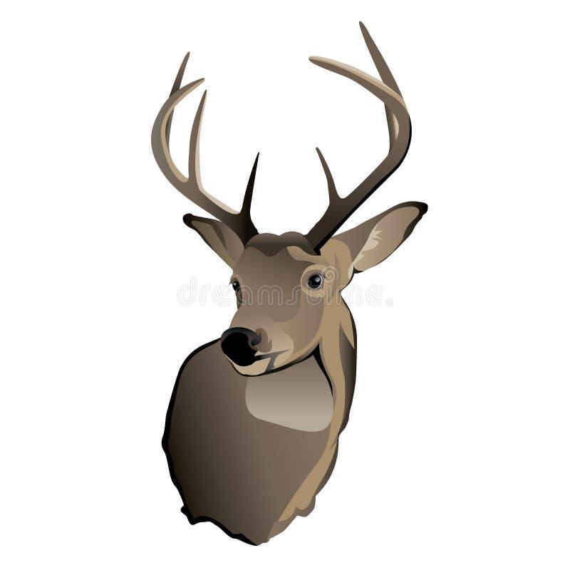 Fanfarrão dos cervos de Whitetail do troféu ilustração stock