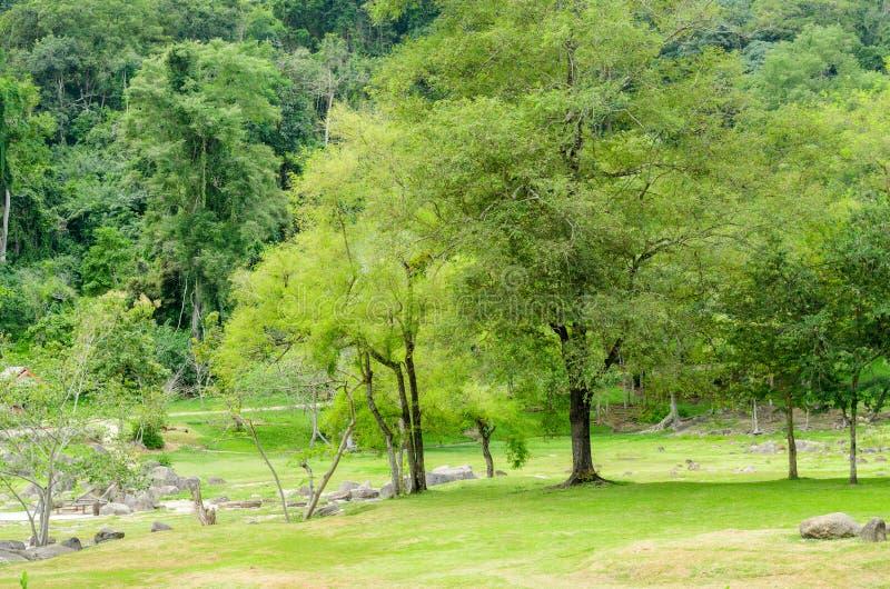 Fang Hot Springs, Tailândia imagens de stock royalty free