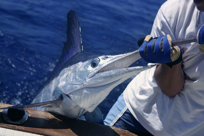 Fang und Freigabe des Knochenhecht-weißen Speerfisches auf Boot lizenzfreies stockfoto