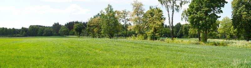 Fangen Sie gesät mit Korn, Baumreihe in der Hintergrundansicht von Th auf lizenzfreie stockfotografie