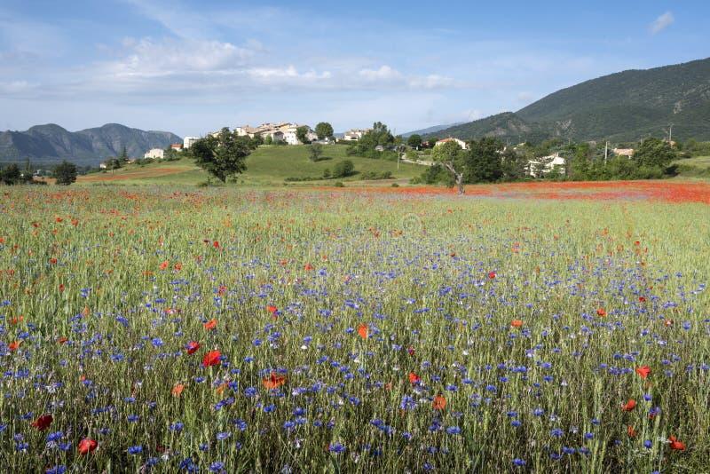 Fangen Sie voll von den roten Mohnblumen und von anderen Sommerblumen nahe altem Dorf auf Hügel auf Französisch Provence auf stockfotos