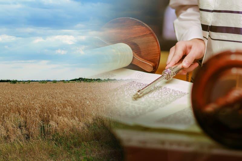 Fangen Sie Weizen in der Zeitraumernte auf Hintergrundhimmel Torah-Lesung mit einem Zeiger auf lizenzfreies stockfoto
