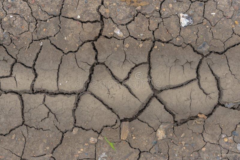 Fango del suelo seco con la plántula y los pepbles fotografía de archivo