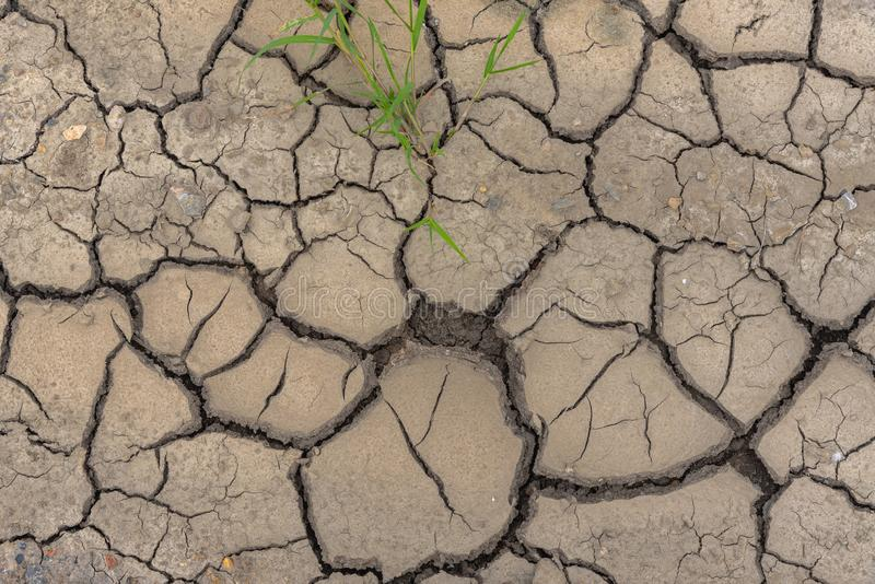 Fango del suelo seco con la plántula y los pepbles imágenes de archivo libres de regalías