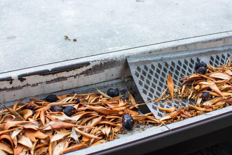 Fango di pioggia ostruito con foglie e olive fotografie stock libere da diritti