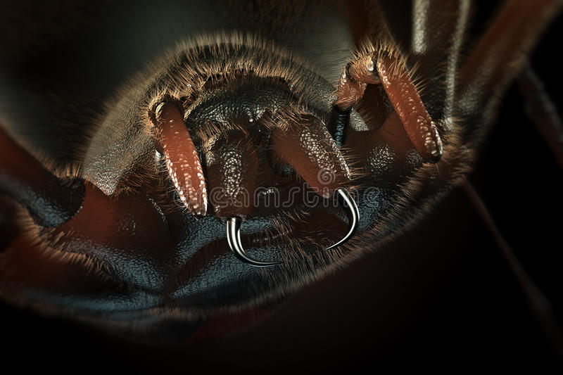 Fangs of hairy spider -3D artwork. Fangs of hairy spider close-up (3D artwork royalty free illustration