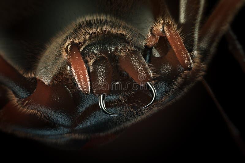 Fangs kosmata pająka -3D grafika royalty ilustracja