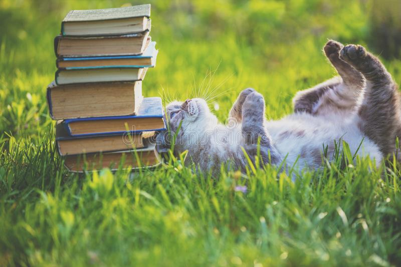 Fanny cat lying on the grass near pile of old books stock photography