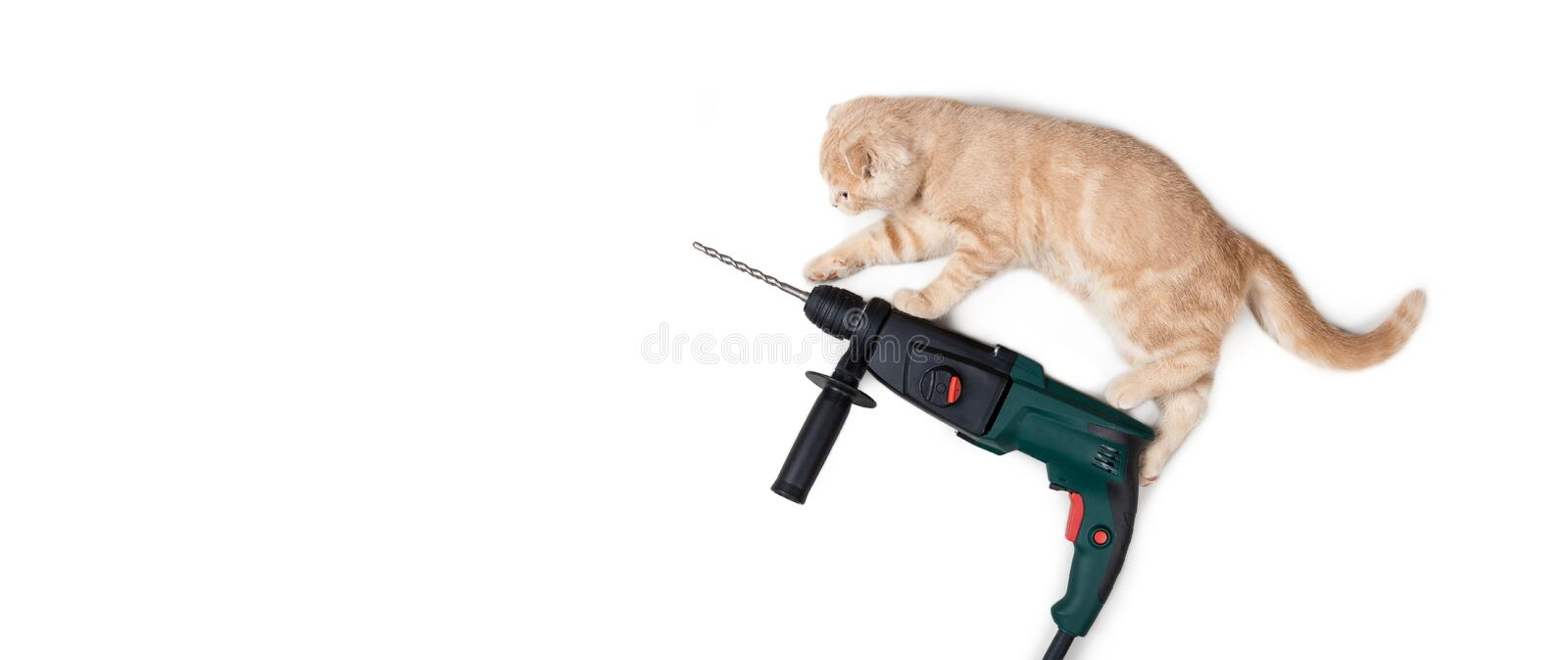 Fanny cat on the puncher isolated on white background. Construction equipment. Kitten with a drill. Building concept. For banner stock images