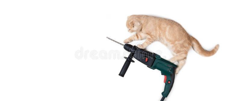 Fanny-Katze auf dem Puncher lokalisiert auf weißem Hintergrund Bohren Sie, elektrische Säge, Bandmaß, Schrauben, Bleistiftzeichnu stockbilder