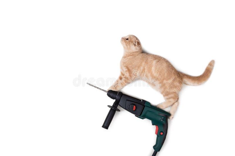 Fanny-Katze auf elektrischer Bohrmaschine auf weißem Hintergrund Bohren Sie, elektrische Säge, Bandmaß, Schrauben, Bleistiftzeich stockfotos