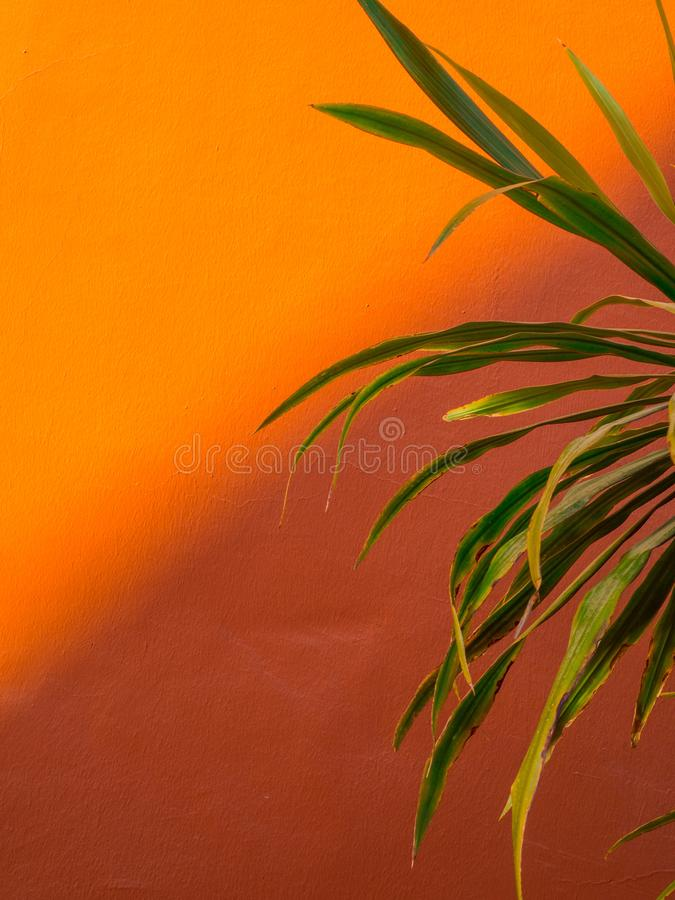 Fanpalmblad på kulör modebakgrund för korall minimalism Id?rikt sommarbegrepp Tropisk trendig växt för närbild på royaltyfria bilder