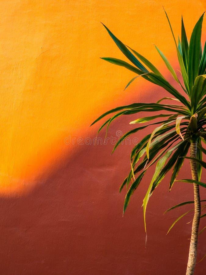 Fanpalmblad på kulör modebakgrund för korall minimalism Id?rikt sommarbegrepp Tropisk trendig växt för närbild på royaltyfri foto