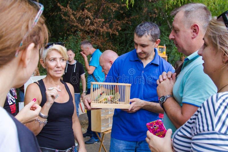 Fans av inhemska dekorativa fåglar royaltyfri bild