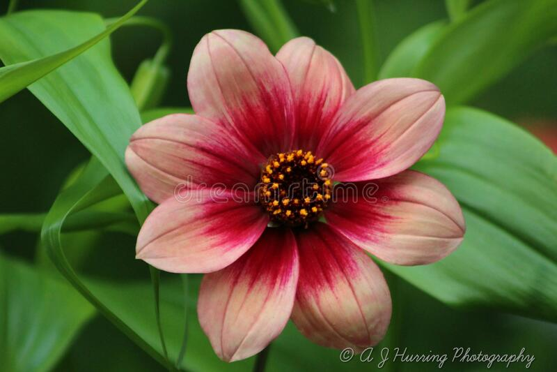 Fantástica foto de una flor roja fotos de archivo