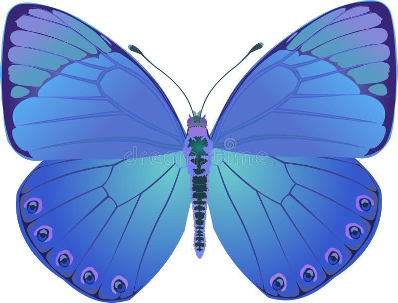 Fantasía del azul de la mariposa ilustración del vector