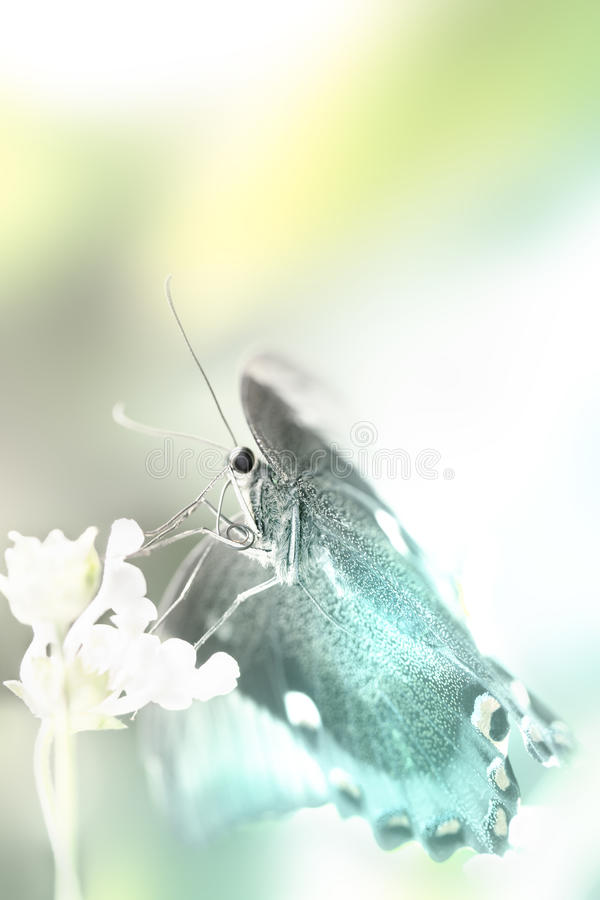 Fantasia da borboleta fotos de stock royalty free