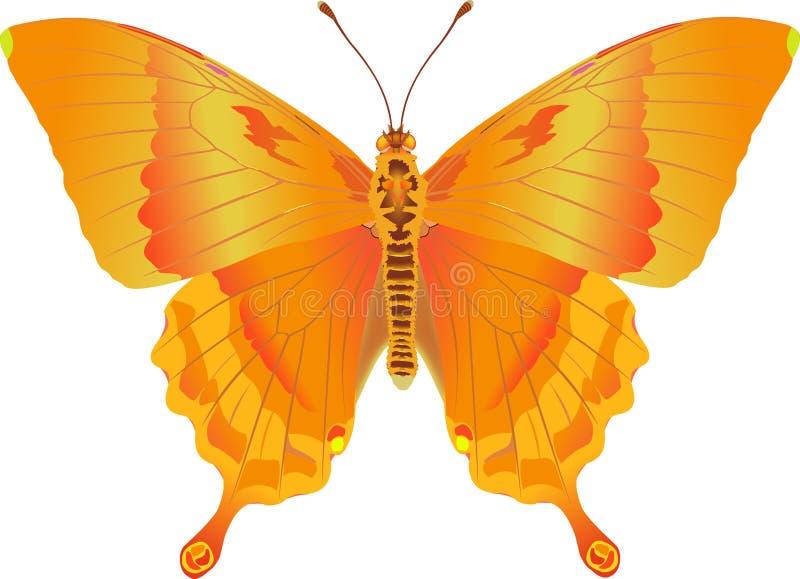 Fantasia del fuoco di Papilio illustrazione di stock