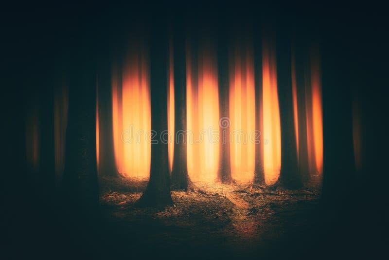 Fantasie donker bos met zonlicht royalty-vrije stock afbeeldingen