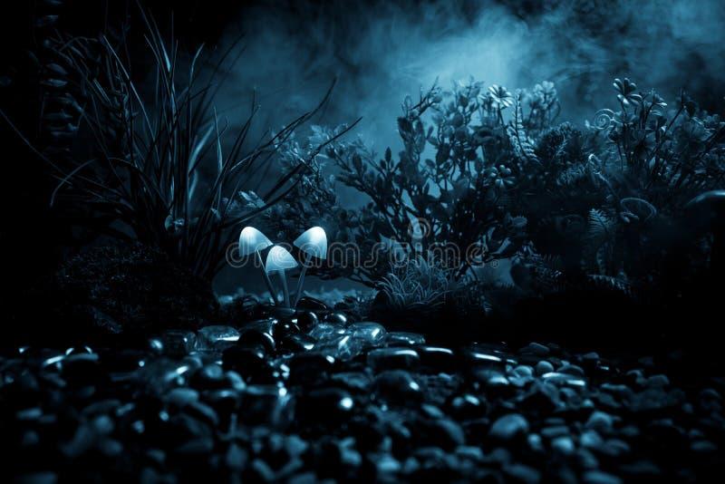 Fantasie Gloeiende Paddestoelen in geheimzinnigheid donker bosclose-up Mooi macroschot van magische die paddestoel of zielen in a royalty-vrije stock foto's